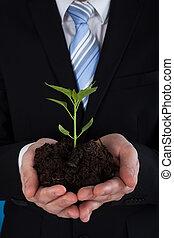 zakenman, sapling, vasthouden