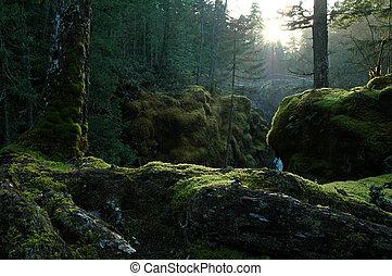 zakletý, les