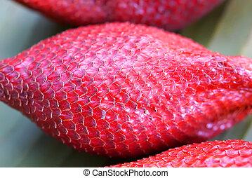 zalacca, wallichiana, uno, de, el, más, famoso, fruits