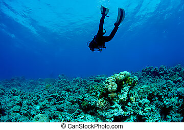 zambullidor de la escafandra autónoma, y, barrera coralina