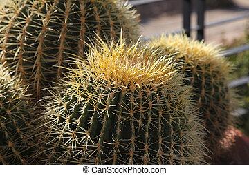 zamknięcie, wizerunek, kaktus, do góry