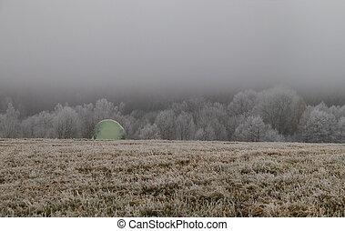zamrzlý, jíní, les, mlha, balený, pokrytý, bojiště, balíkovat, maličkost