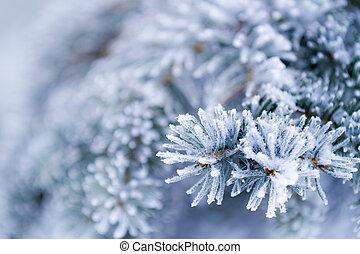 zamrzlý, jehličnatý, neposkvrněný, větvit, zima