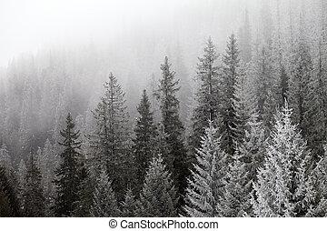 zamrzlý, mlha, zima, les