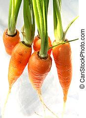 zanahoria, aislado, grupo
