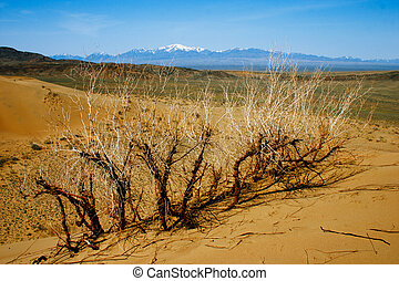 zand, kazakhstan., woestijn, park, altyn-emel, nationale, duinen
