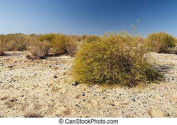 zand, struik, groene, steppes, kazachstan
