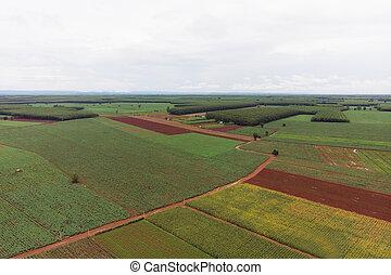 zangão, tiro, vista aérea, paisagem, panorâmico, de, rural, campo agricultura