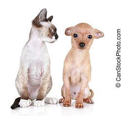 zangado, gato, com, a, assustado, filhote cachorro