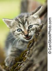 zangado, pequeno, gato