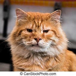 zangado, rua, gato