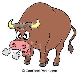 zangado, touro