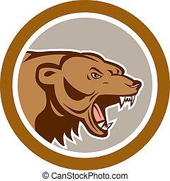 zangado, urso pardo, cabeça, círculo, caricatura