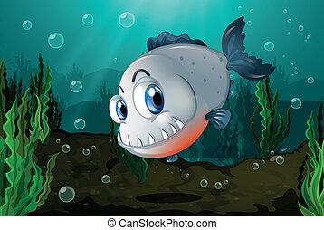 zanne, pesci grandi, mare, sotto