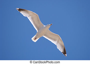 zanvoort, seagull