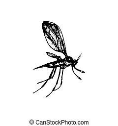 zanzara, icona