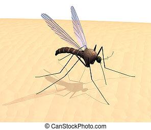 zanzara, pelle