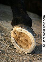 zapato del caballo