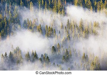 zapfentragend, majestät, dunstig, natur, nationalpark, sunrise., morgen, wald