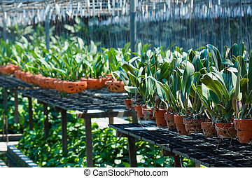 zasadit, do, jeden, bylina