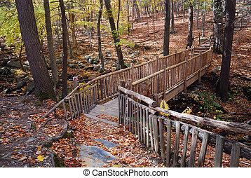 zatoczka, las, jesień, most