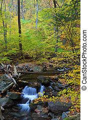 zatoczka, las, jesień