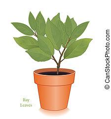 zatoka, ziele, liście, doniczka, glina