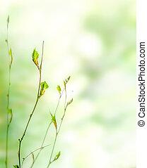 zawiązki, wiosna, zielone tło, natura