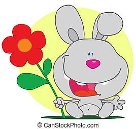 zawiera, królik, kwiat