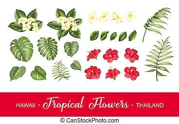 zbiór, białe tło, komplet, kwiaty, elements., tropikalny