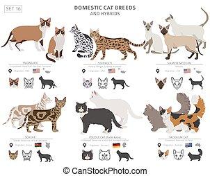 zbiór, kot, dziedziczy się, styl, hybrydowy, set., white., ...