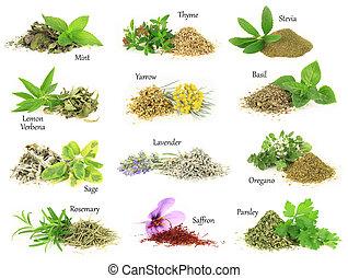 zbiór, od, świeży, i, suchy, aromatyczny, zioła