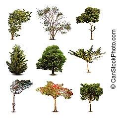 zbiór, od, drzewa, odizolowany, na białym, tło., wektor