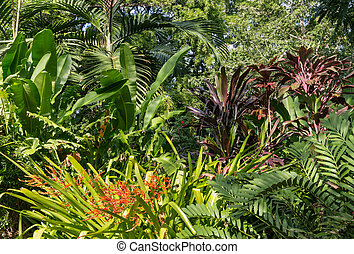 zbiór, od, rośliny, rozwój, w, tropikalny, rainforest
