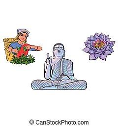 zbieracz, kobieta, lotos, herbata, wektor, budda, kwiat, statua