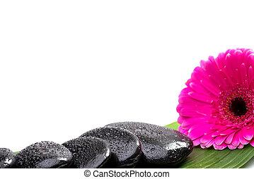 zdrój, kamienie, na, zielony liść, z, kwiat