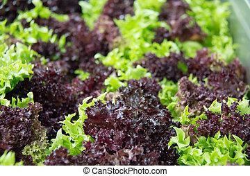 zdravý food, nedávno rostlina, salát, closeup