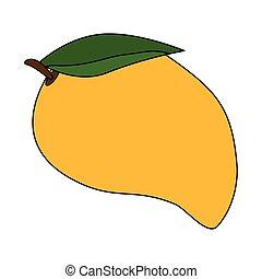 zdrowy, świeży, mangowiec, owoc
