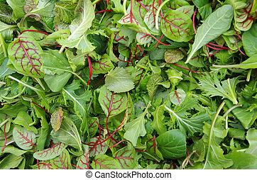 zdrowy, pole, ziele, sałata