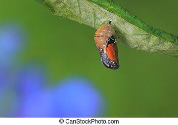 zdumiewający, chwila, o, motyl