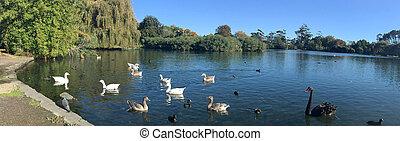 zealand, オークランド, 公園, 西部, ばね, 新しい