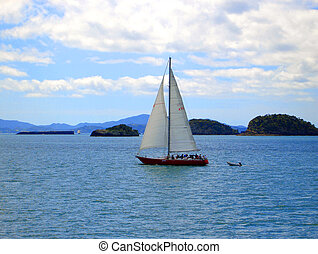 zealand, 航海, 湾, によって, 新しい, 島