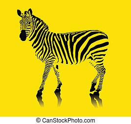 zebra, żółty