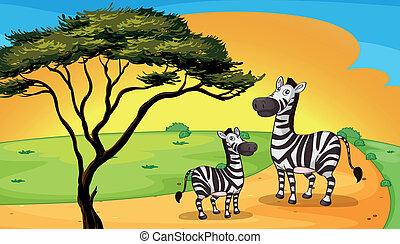 zebra, albero, due, sotto