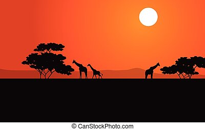 Zebra at afternoon scenery