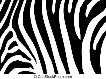 zebra background as very easy animal background
