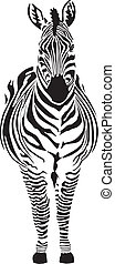 Zebra - vector illustration front view, black and zero