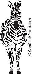 Zebra - black and zero - Zebra - vector illustration front...