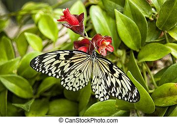 Zebra butterfly hang on a red flower