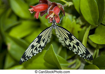 Zebra butterfly on a flower